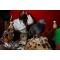 Traditional Herbalist Healers In Soweto,Johannesburg +27780597608 Lenasia,Orange